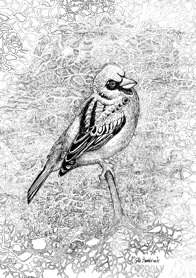 black and white line drawing of a sparrow